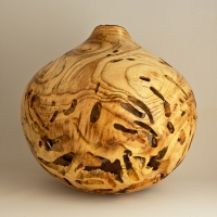 Infested White Mulberry Burl Hollow