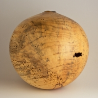Natural Infested Box Elder Hollow - $1200.00