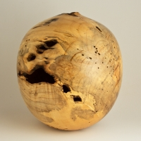 Infested Blue Stain Box Elder Hollow - $640.00