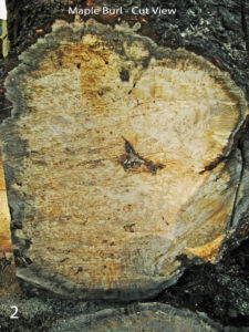 wood species red maple burl fresh cut