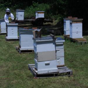 Chowan County Bee Hives
