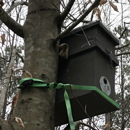 double deep swarm box in a beech tree