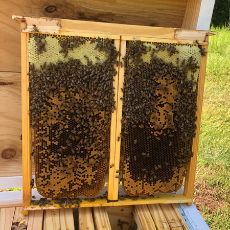 North Carolina Honey and brood in a double deep frame - side by side configuration